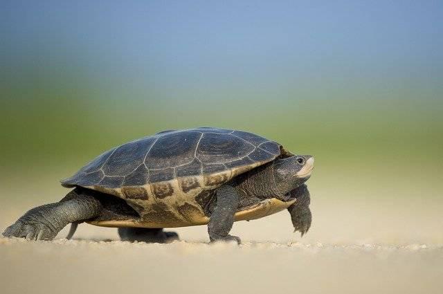 Amphibian Turtle Animal - Free photo on Pixabay (741588)