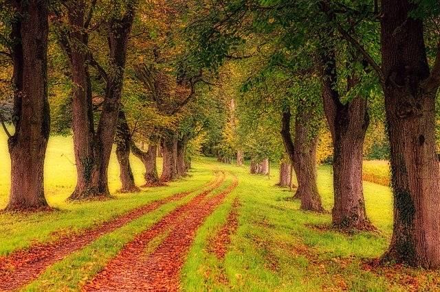 Tree Avenue Nature - Free photo on Pixabay (743391)