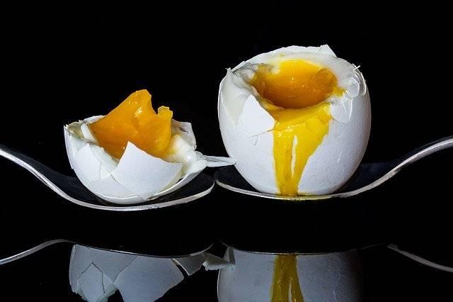 Egg Bisected Boiled - Free photo on Pixabay (743397)