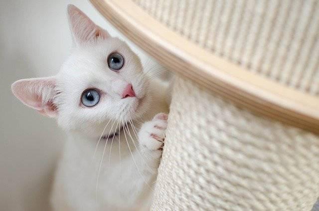 White Cat She-Cat - Free photo on Pixabay (743940)