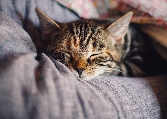 Cat Domestic Sleep - Free photo on Pixabay (743949)