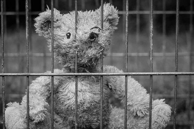 Teddy Bear Lost - Free photo on Pixabay (747528)