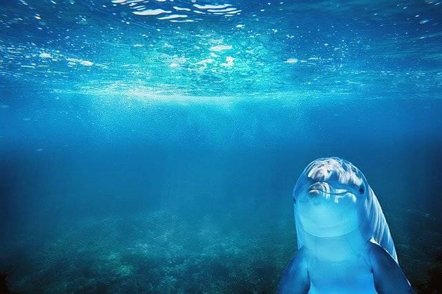Sea Blue Dolphin - Free photo on Pixabay (748010)