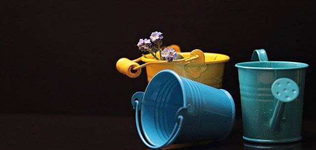 Bucket Forget Me Not Flower - Free photo on Pixabay (748021)