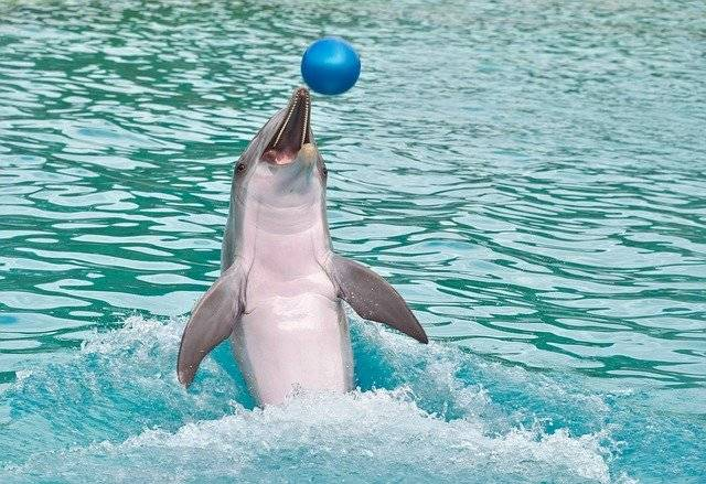 Dolphin Ball Play - Free photo on Pixabay (748472)