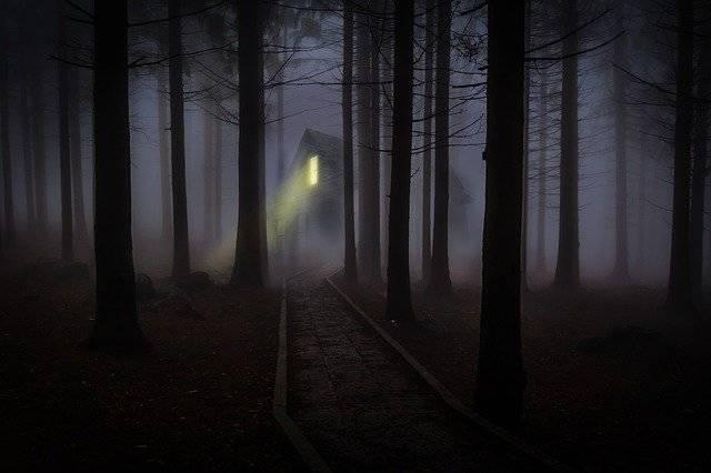 Foggy Mist Forest - Free photo on Pixabay (748511)