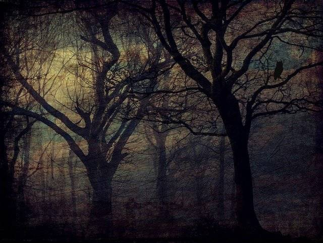 Forest Owl Trees - Free image on Pixabay (748898)
