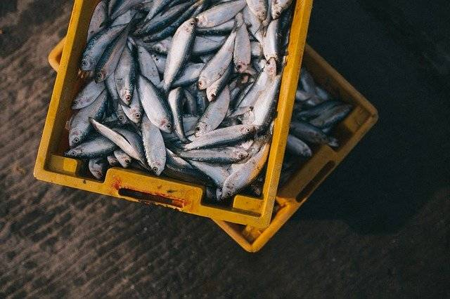 Fish Catch Box - Free photo on Pixabay (749834)