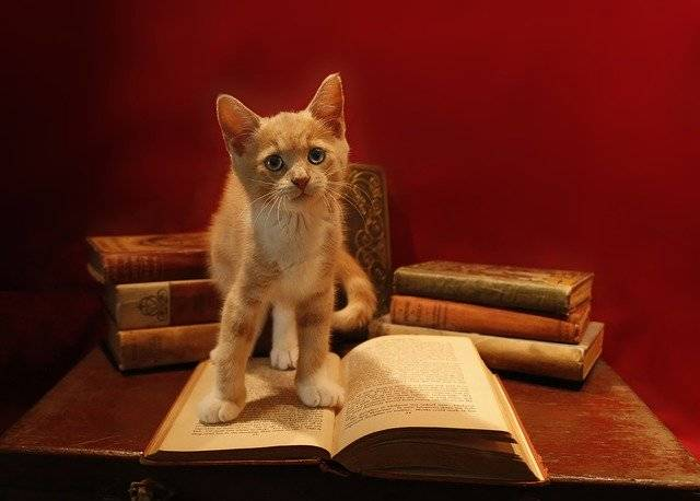 Domestic Cat Little - Free photo on Pixabay (750129)