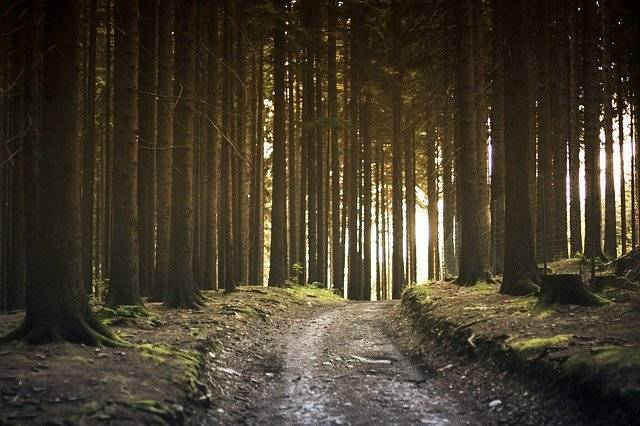 Dirt Road Forest Landscape - Free photo on Pixabay (751585)