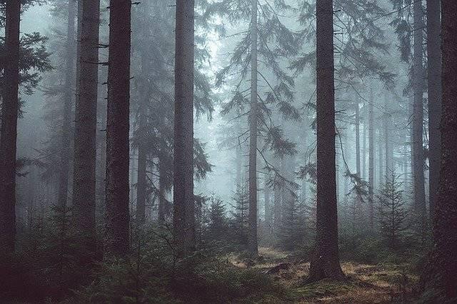 Forest Woods Misty - Free photo on Pixabay (751590)
