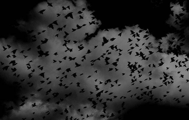 Birds Flock Wings - Free photo on Pixabay (751597)