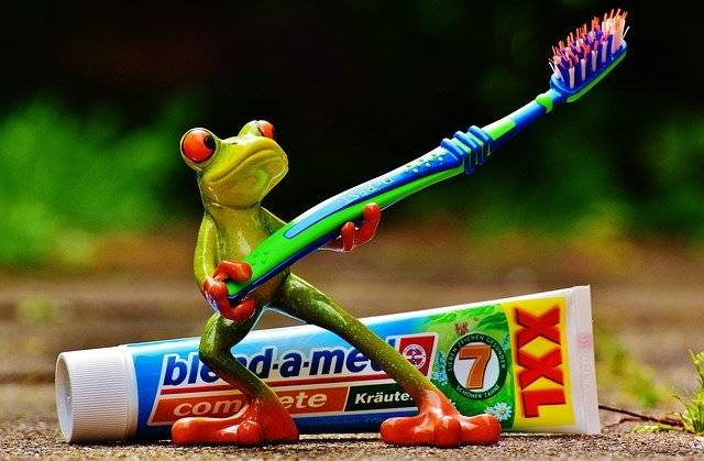 Toothpaste Frog Toothbrush - Free photo on Pixabay (753140)