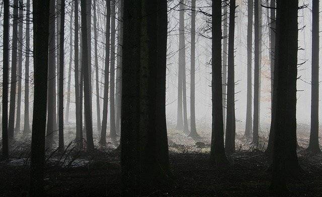 Forest Trees Fog - Free photo on Pixabay (753241)
