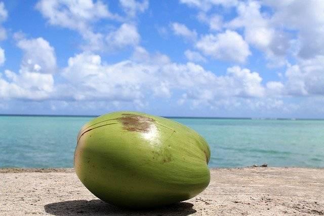 Coconut Guam Sky - Free photo on Pixabay (753371)