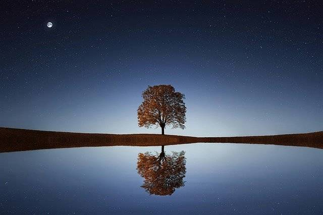 Tree Lake Reflection - Free photo on Pixabay (753751)