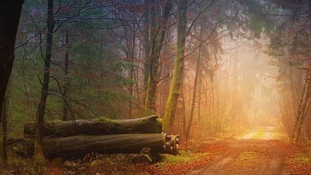 Autumn Fog Forest Tree - Free photo on Pixabay (753818)