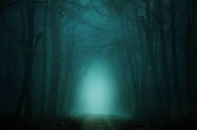 Forest Away Fog - Free image on Pixabay (753819)