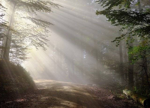 Morning Fog Sunbeam - Free photo on Pixabay (753869)