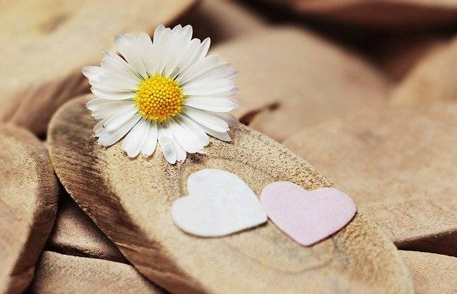 Daisy Heart Herzchen Thank - Free photo on Pixabay (754730)