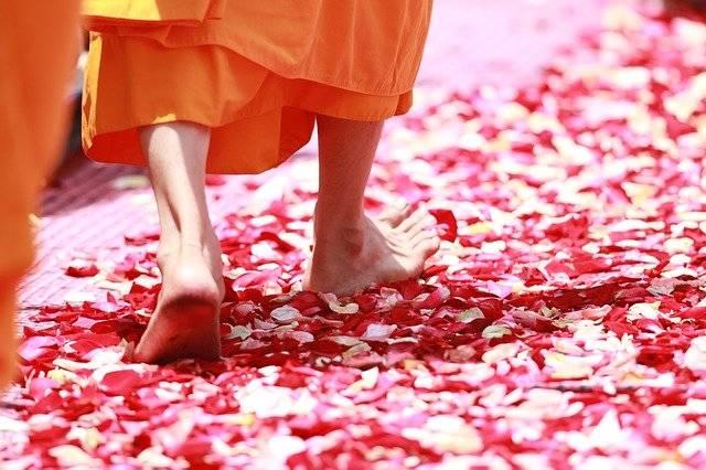 Monk Walking Rose Petals - Free photo on Pixabay (754751)