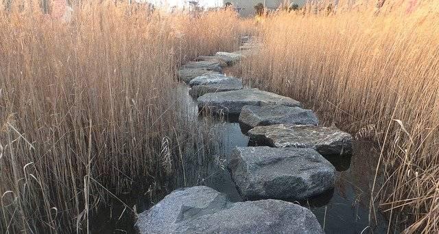 Reed Stepping Stone - Free photo on Pixabay (755549)