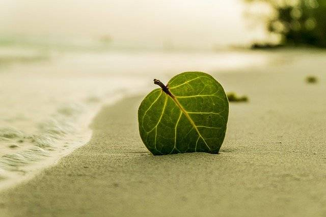 Beach Leaf Green - Free photo on Pixabay (755736)