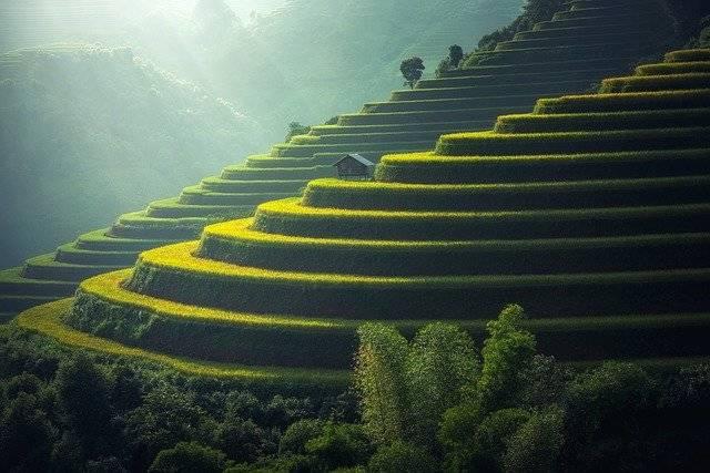 Rice Plantation Thailand - Free photo on Pixabay (756535)