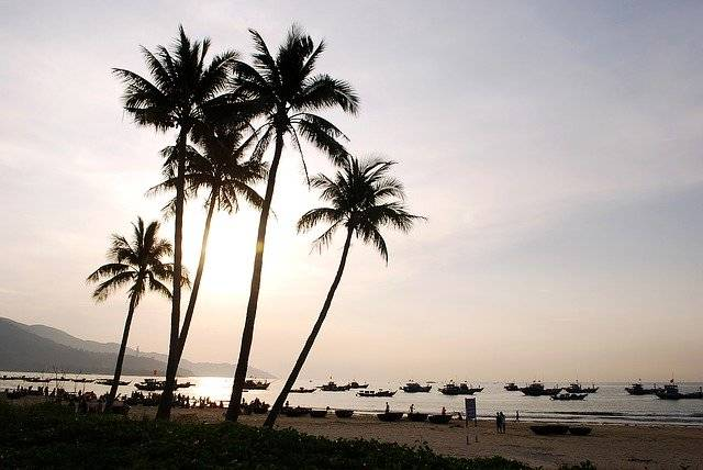 Coconut Tree Melons The Sea - Free photo on Pixabay (756647)