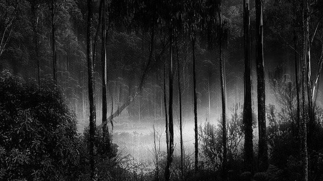 Forest Fog Misty Camping - Free photo on Pixabay (756926)