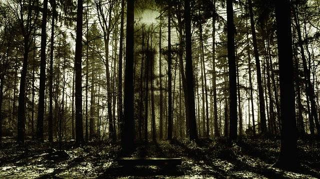 Horror Face Forest - Free image on Pixabay (757955)