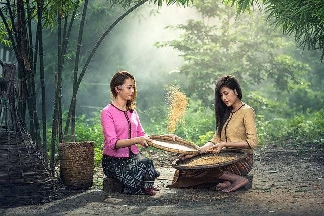 Rice Women Sitting - Free photo on Pixabay (758922)