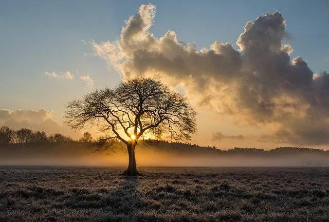 Lone Tree Oak - Free photo on Pixabay (759234)