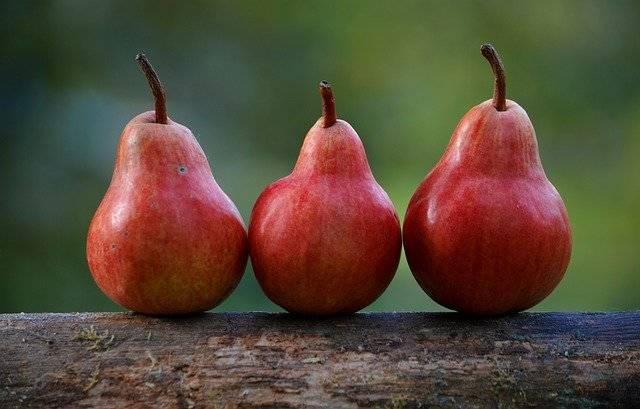 Pears Red Branch Pyrus - Free photo on Pixabay (759897)