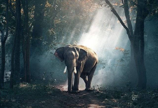Elephant Animals Asia - Free photo on Pixabay (760209)
