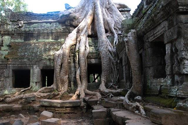 Angkor Wat Tree Tourism - Free photo on Pixabay (760681)