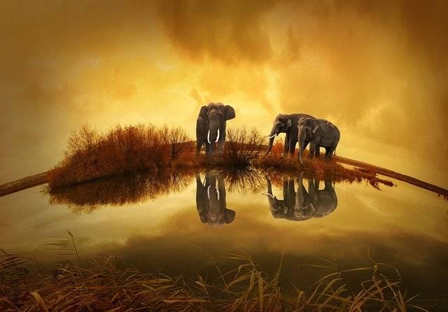 Thailand Elephant Sunset - Free photo on Pixabay (761246)