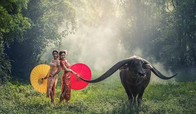 Lady Buffalo Asia - Free photo on Pixabay (761282)