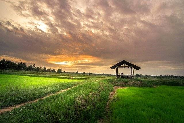 Home Outside Thailand Cornfield - Free photo on Pixabay (763285)