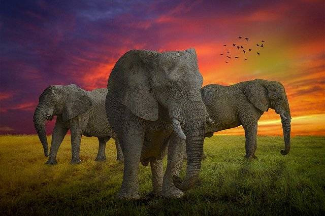 Manipulation Elephant Animal - Free photo on Pixabay (763878)