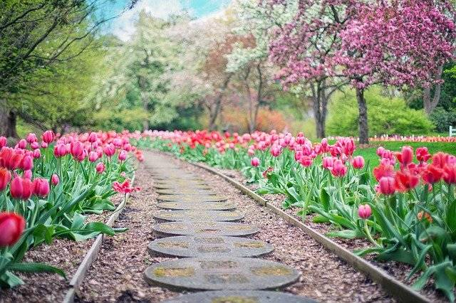 Pathway Path Pink Tulips - Free photo on Pixabay (764153)