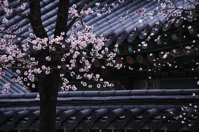 Korea Traditional Tree - Free photo on Pixabay (764349)