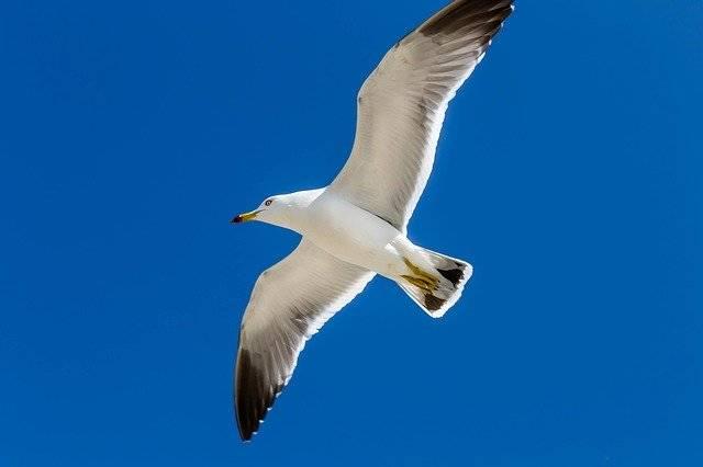 Seagull New Sea Ocean - Free photo on Pixabay (764494)