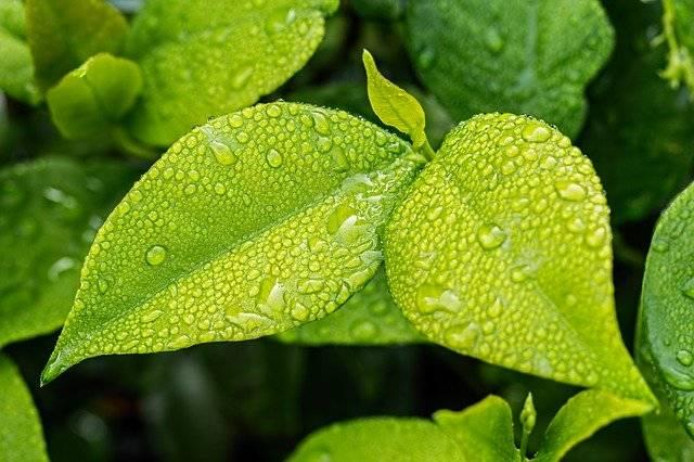 Leaf Green Foliage - Free photo on Pixabay (767934)