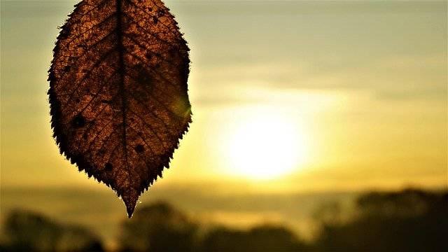 Background Sunrise Autumn - Free photo on Pixabay (768653)