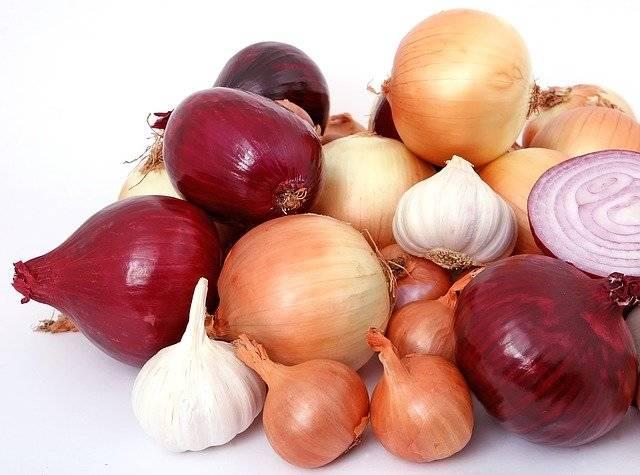 Bulb Onions Diet - Free photo on Pixabay (770428)