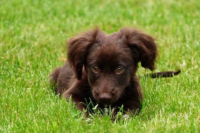 Animal Dog Pet - Free photo on Pixabay (772152)