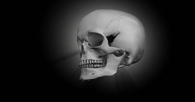Skull Bone Head - Free image on Pixabay (774854)