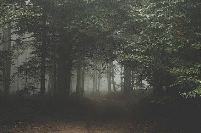 Forest Dark Woods - Free photo on Pixabay (777054)