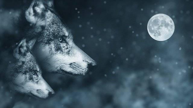 Wolf Moon Night - Free image on Pixabay (777278)